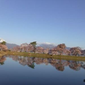 信州伊那谷笠原の堤とは。。。さくら満開 その1