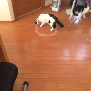 日本一再生回数が少ないネコ。。。ネコホイホイに挑戦