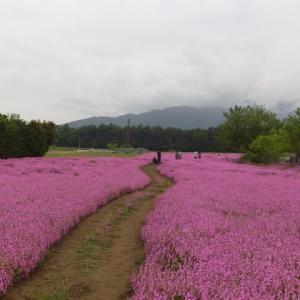信州伊那谷南箕輪村 くりんそうの花畑