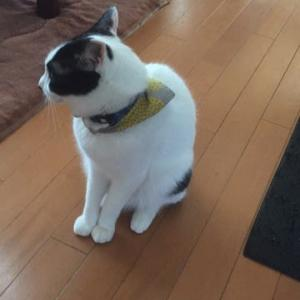 日本一再生回数の少ない我が家のネコ。。。 あまりの暑さに。。。閑話休題バージョン