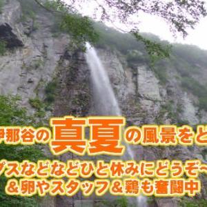 暑中御見舞がわりに、、、信州の涼をお届け 米子大瀑布 不動滝