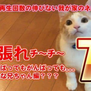 がんばってもがんばっても。。。? 日本一再生回数の伸びないネコ?頑張れチーチ