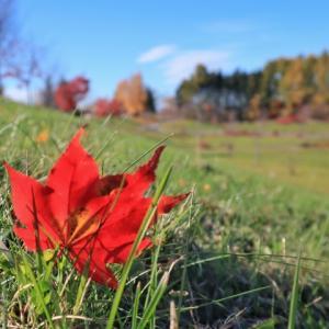 楽しさや、ワクワクは自分から見つけることができるのかもしれません。~小さい秋、み~つけた♪~