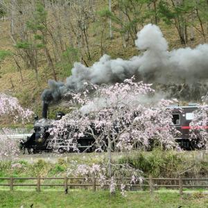 もおか路(桜に隠されて汽車が見えません)