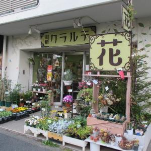 狛江の日々 「クラルテ」 花屋