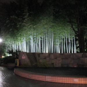 狛江の日々 竹林ライトアップ たぬき出没