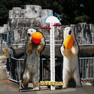 浜松市動物園のホッキョクグマ 「モモ」