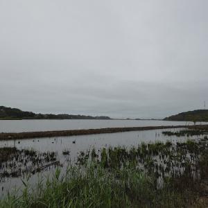 10月19日の佐鳴湖畔 今日も雨
