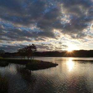 11月15日の佐鳴湖畔 冷え込む朝