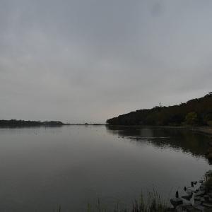 11月22日の佐鳴湖畔 暗い雨の朝