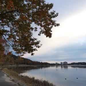 12月6日の佐鳴湖畔 雲の多い朝