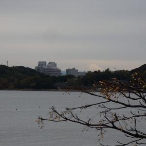 12月7日の佐鳴湖畔 曇って暗い一日でした
