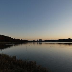 12月9日の佐鳴湖畔 カワウ走る朝