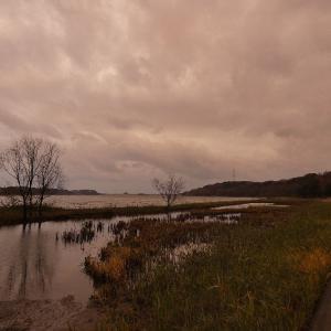 1月8日の佐鳴湖畔 雨の合間に