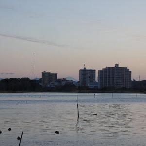 1月10日の佐鳴湖畔 今年は暖冬に