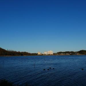 1月11日の佐鳴湖畔 小春日和