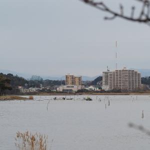 1月12日の佐鳴湖畔 不思議な波が見られました