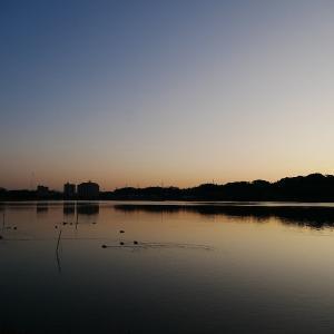 1月14日の佐鳴湖畔 霜が降り