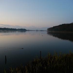 1月15日の佐鳴湖畔 雨上がりの散策