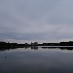 1月17日の佐鳴湖畔 モノトーンの朝