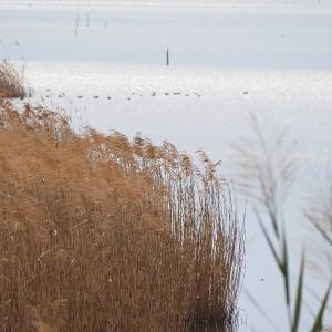 1月18日の佐鳴湖畔 雨上がりの散策