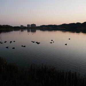 1月20日の佐鳴湖畔 大寒の朝