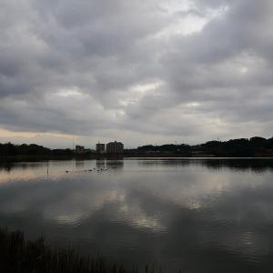 1月22日の佐鳴湖畔 暗い朝
