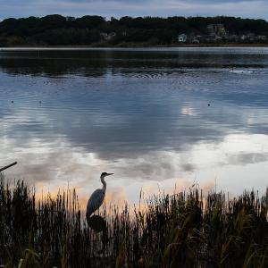 1月29日の佐鳴湖畔 4月上旬並みの陽気になりました