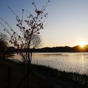 2月18日の佐鳴湖畔 肌寒い一日