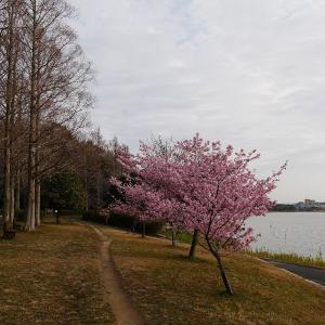 2月22日の佐鳴湖畔 3連休初日は荒れたお天気に
