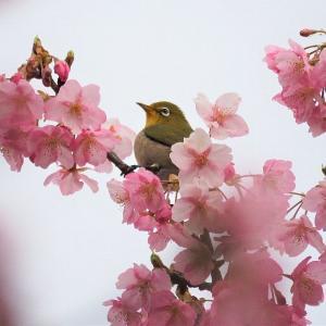 初春の浜名湖ガーデンパーク 梅、桃、桜