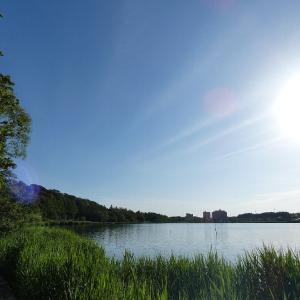 5月25日の佐鳴湖畔 眩しい朝
