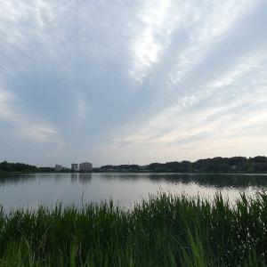 5月26日の佐鳴湖畔 雲の多い一日