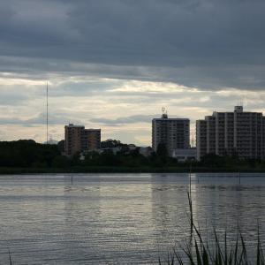 5月27日の佐鳴湖畔 カワセミJrは姿を見せず