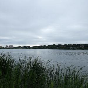 6月1日の佐鳴湖畔 雨が降る前に