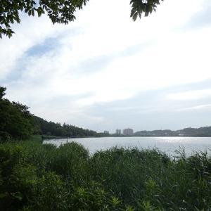 6月15日の佐鳴湖畔 カワセミに異変が