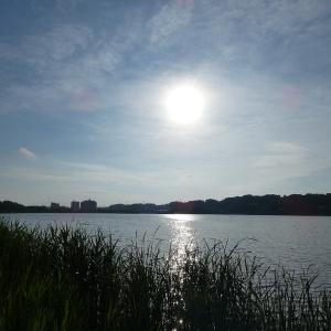 6月24日の佐鳴湖畔 鳥影薄く
