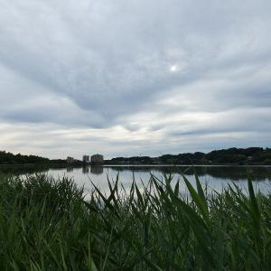 7月3日の佐鳴湖畔 梅雨空に富士山が見られました