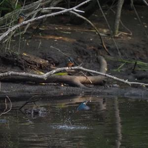 7月6日の佐鳴湖畔 雨のため散策はお休みです