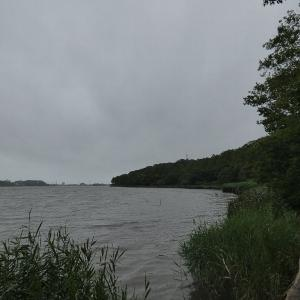 7月8日の佐鳴湖畔 雨は降り続き