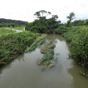 7月26日の佐鳴湖畔 新川河口に異変が
