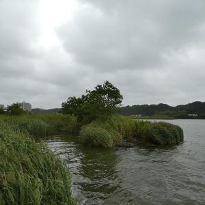 9月18日の佐鳴湖畔 一歩夏に戻る