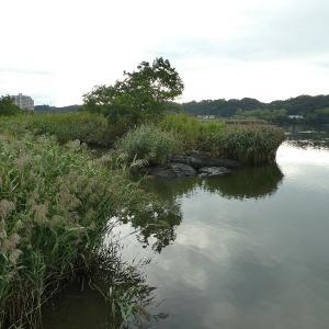 9月24日の佐鳴湖畔 少しずつ秋の気配に