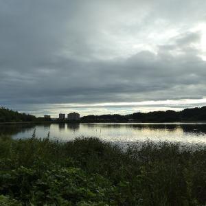 9月25日の佐鳴湖畔 早朝の散策