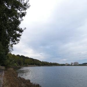 10月19日の佐鳴湖畔 オオタカがいました