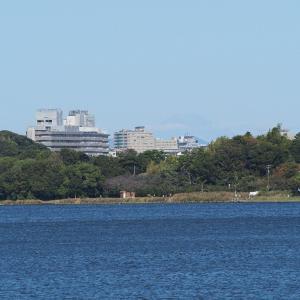 10月25日の佐鳴湖畔 冬鳥来る