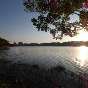 10月28日の佐鳴湖畔 眩しい朝