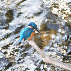 10月31日の佐鳴湖畔 今季一番の冷え込みに