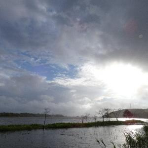 11月20日の佐鳴湖畔 雨の一日でした