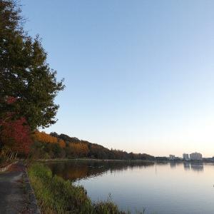 11月25日の佐鳴湖畔 晴れた朝は鳥影薄く